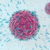 Monoklonale Antikörper: Angriff der Klonkrieger (FOTO)